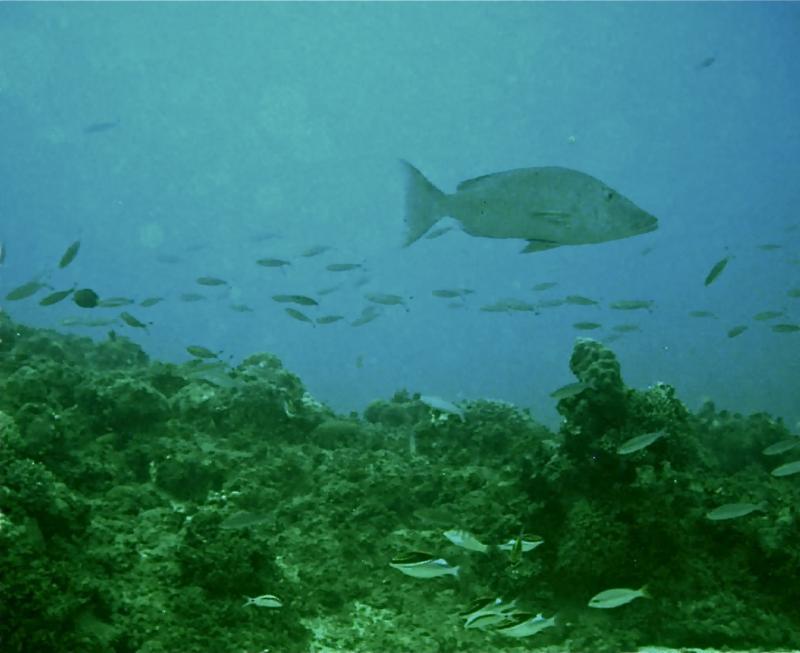 MayonViewResort.com Reef
