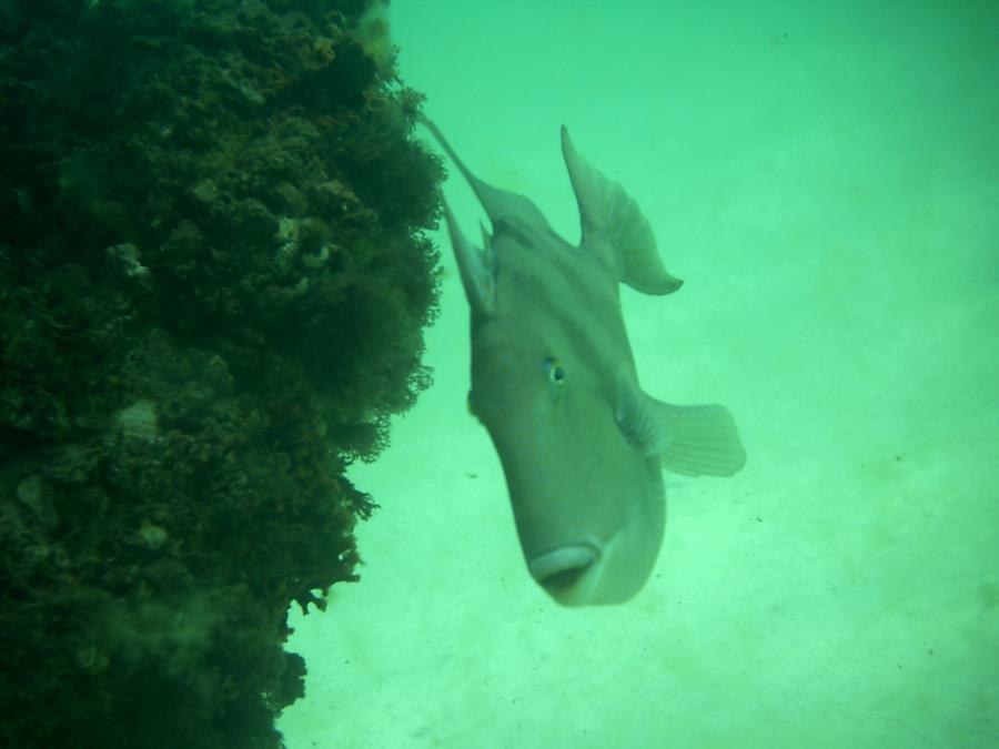 Navarre, FL Reef
