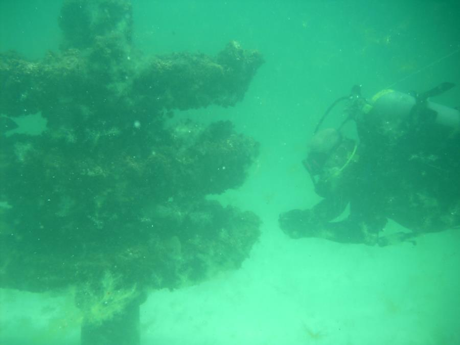 Reef Structure