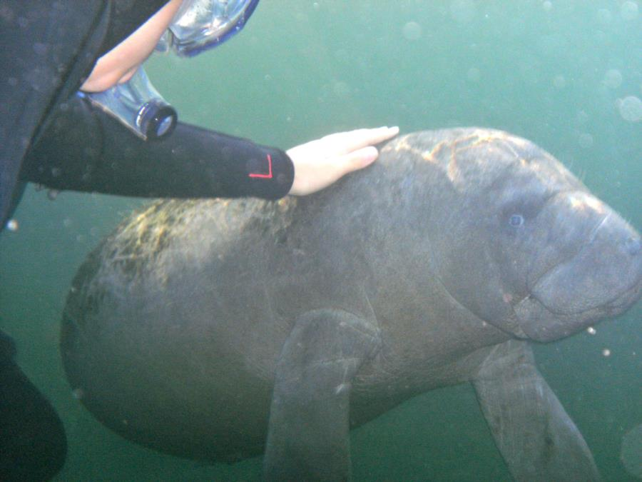 7yr old Grandson with 3mo old manatee