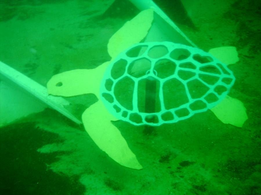 Turtle on Joe Patti Reef