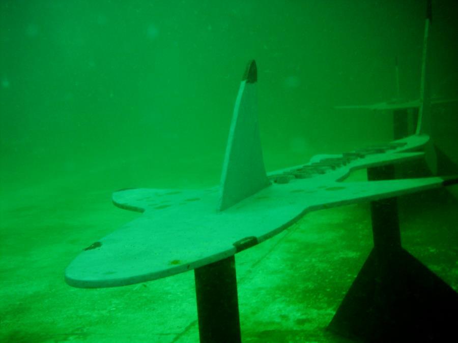 Sharks on Joe Patti Reef