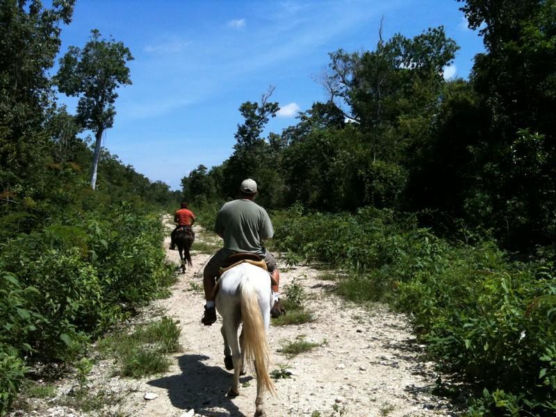 Into the Jungle !!!!! Cozumel 2010