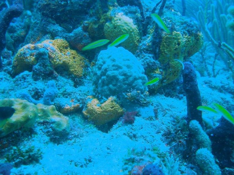 Guanica corals