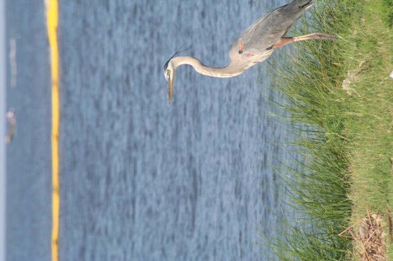 Bird on the Gulf Shore
