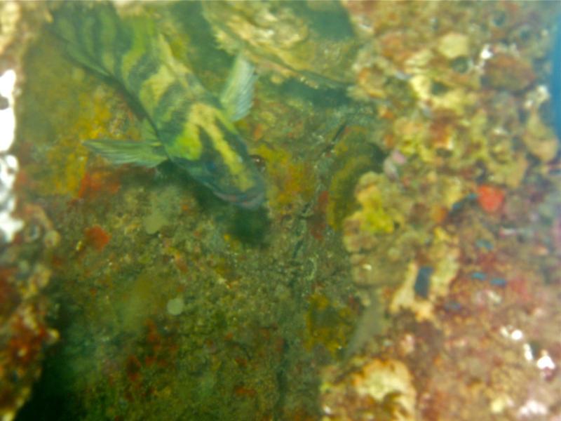 Tree Fish