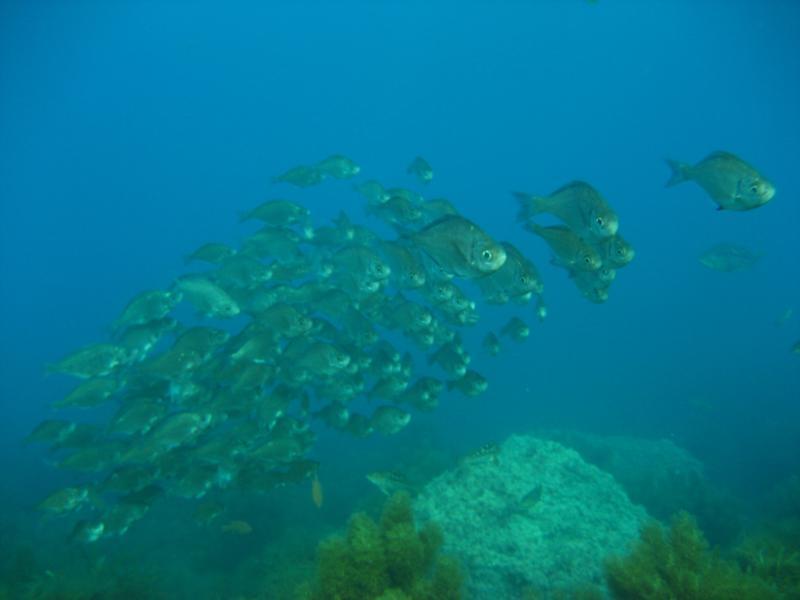 isla guadalupe-
